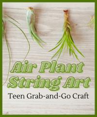 Air Plant Art